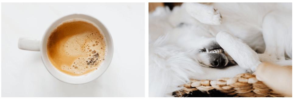 KaboomPics. Bild på kaffekopp och en hund som ligger upp och ner.