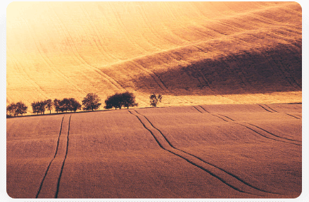 Picjumbo. Bild på en stor äng med fantastiskt solsken.