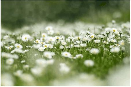 Pixabay. Bild på sommaräng.